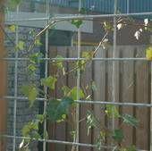 Intergard Betongaas betonmat schutting vuurverzinkt hedera 2x3m 5/150mm online kopen